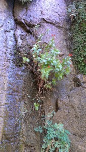 Flowering plant growing on cliff face