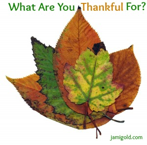 Cluster of fall-colored leaves with text: What Are You Thankful For?