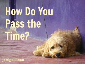 Bored dog with text: How Do You Pass the Time?