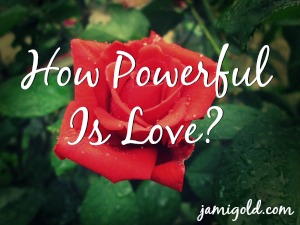 Close-up of a rose with text: How Powerful Is Love?