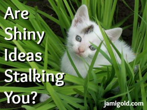 Kitten in tall grass with text: Are Shiny Ideas Stalking You?