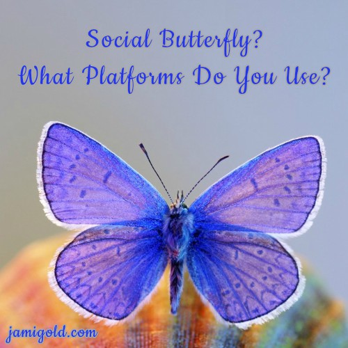 Close up of a purple butterfly with text: Social Butterfly? What Platforms Do You Use?