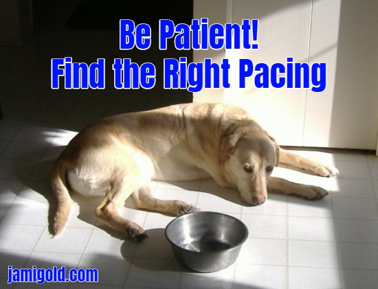 Dog in sunbeam with empty food bowl with text: Be Patient! Find the Right Pacing